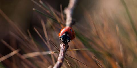 GS-fb-ladybug
