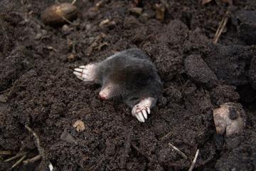 Mole-photo-fb