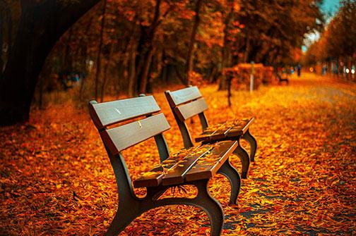 fall-leaves-fb