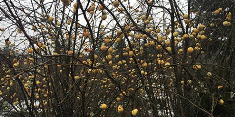 fruit-tree-fb