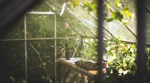 greenhouse-image