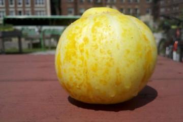 lemon_cucumber-fb