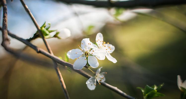 spring-flowers-fb